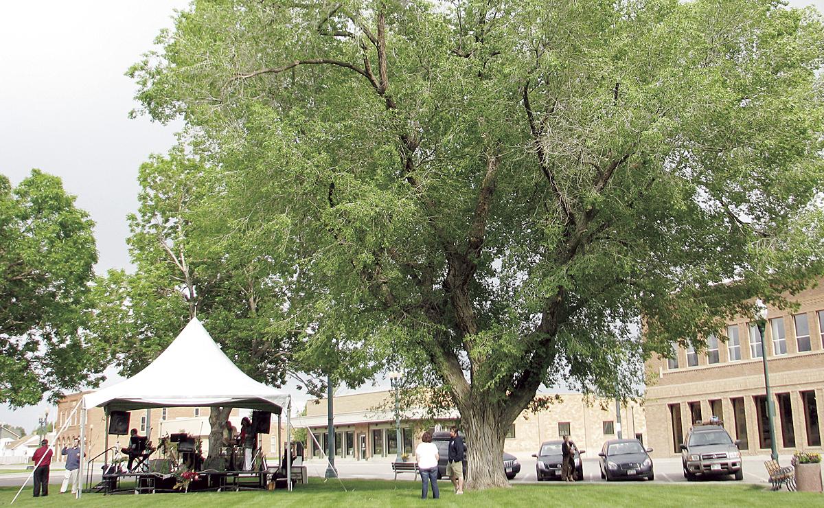 phmkconcert tent tree
