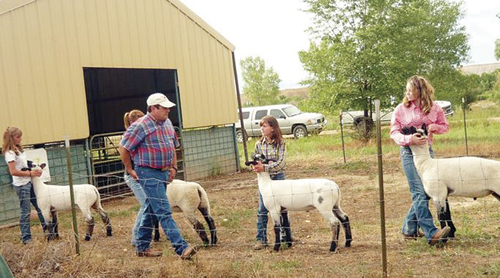 Photo by 4-H member Trenton Files  Clint Shults sorts the lamb showmanship class. Left to right in the picture is Justyne Dembowski, Clint Shults, Shelby Neiberger, Kacie Lapp and Cheyenne Steele.