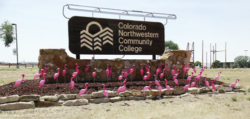 A flock of flamingos has arrived in on the CNCC Rangely Campus to help the local college raise money for its 50th anniversary celebration. For more in information about the fundraiser, contact Denise Wade at 675-3271.