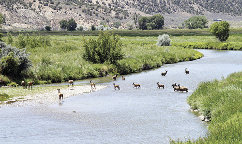 phrbc elk crossing river
