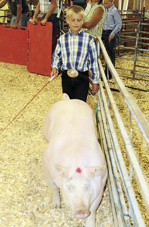 phrbcfair kelton and pig