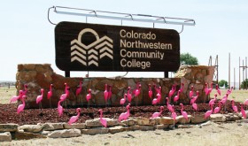 A colony of pink flamingos visits Silver Sage RV &amp; Mobile Home Park while raising money for the CNCC Foundation celebration for the 50th anniversary of the college.