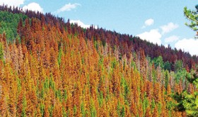 With all the timber made available by the bark beetle epidemic, obtaining wood hasn't been a problem for the mills in recent years.