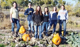 phrgfbla pumpkins