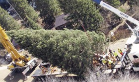 Many people watched as the 73-foot Englemann spruce, weighing 9,000 pounds, was loaded onto an 80-foot trailer.