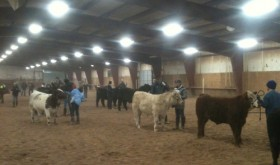 Seventeen Rio Blanco County youth practiced their showmanship skills with 4-H leader Blaine Franklin teaching.