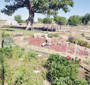 phRGCommunity Gardens