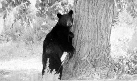 Bears close national monument …