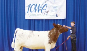 Macy Collins of Meeker captured a series of ribbons at the Junior National Shorthorn Show and Conference in Des Moines, Iowa, competing against 413 other juniors.