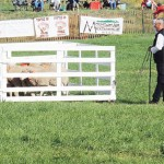 Scott Gellings of Dawson Creek, British Columbia, Canada, raises his red cap after completing a great first run of the day at Sunday's finals of the Meeker Classic Sheepdog Championship Trials. Gellings held the lead all day, having garnered 139 points, barely edging Scott Glen of New Dayton, Alberta, Canada, who ran up a score of 138.5.