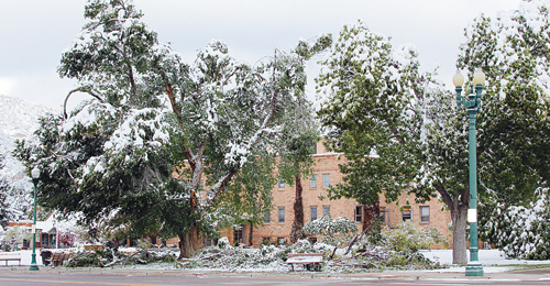 The cottonwoods around the courthouse lost branches under the weight of 5-8 inches of wet, heavy snow.