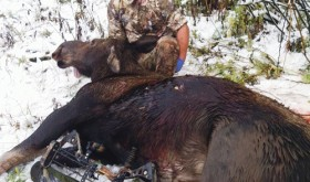 Meszaros gets first-ever archery moose in area…