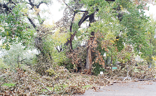 While the Town of Rangely and Western Rio Blanco Metropolitan Park and Recreation District employees removed the majority of fallen limbs from the Rangely Camper Park on Oct. 4 to make way for hunters, the storm's effects on the park are still evident as they are in other parts of Rangely as well as Meeker. Steve Urie used an extended boom crane to remove a mass of foliage and limbs away from a raw water pump house slightly damaged by fallen trees, above.