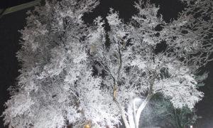 phRangelyHoarfrost