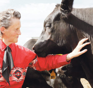 Temple Grandin, 66, called one of the most 100 most influential people in the world for her work with livestock handling equipment as well as one of the world's foremost experts on autism, will be part of the Ag and Business Summit in Meeker on April 26. The designer of most modern livestock handling equipment and author of many books on agriculture and autism, herself being autistic, currently teaches at Colorado State University in Fort Collins.