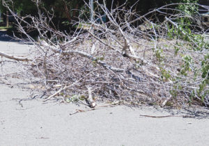 These branches were piled in the street in a Meeker neighborhood on Friday. This is the type of trash and debris, including unmowed and untrimmed lawns, that the Town of Meeker will be cracking down on in the next few months, in the hope that residents will respond and clean up their residences. The city is serious about the problem, according to Meeker Town Manager Scott Meszaros, who said the town will be enforcing clean-up rules on residents who refuse.