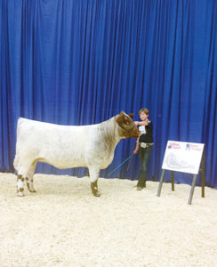 """Macy Collins of Meeker poses during the Louisville, Ky., judging with her heifer, AF Revival or """"Viv,"""" at the Junior National Shorthorn Show and Conference. Collins competed against 450 others with Viv, who placed fourth in her class. Collins also placed in several other events."""