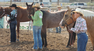 Three entries prepare for the Class 5 gelding lead class on Saturday morning.