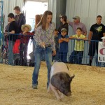 Halle Ahrens – Meeker Market Champion Swine Sold for $3,750 – Yampa Valley Bank