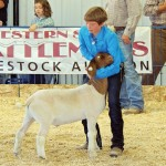 Macy Collins - Meeker Market Champion Goat Sold for $3,250 - Alliance Energy