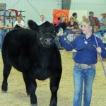 Kolbi Franklin – Meeker Market Champion Beef Sold for $5,250 – Buffalo Horn Ranch
