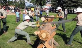 Sawing logs…