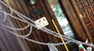 A hard frost Friday night left its trademark crystals on trees, grasses and even spiderwebs Saturday morning. In the first few days of the new year, temperatures will climb into the high 20s but are not projected to get much, if any, above freezing.