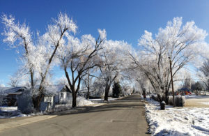 A huge fog bank passed through Rangely on Wednesday night last week and left a huge trail of hoarfrost in its wake. Above, tall trees coated with the hoarfrost formed a tunnel of pavement for Rangely residents to drive.