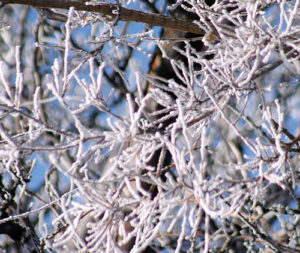 Hoarfrost is formed when the air or fog is so cold that the water/humidity in the air comes in contact with a solid item like trees, leaves, branches and tall grasses, and it freezes. The bright white is caused by the sun shining through the bright snow or frost crystals.