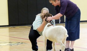MES reading challenge ends with goat kisses