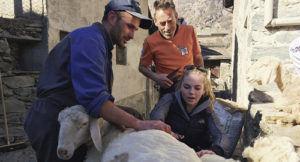 Paula is shearing sheep the old fashioned way in the Italian village of Valmalenco.