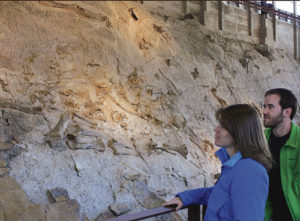 This wall of fossils is just one of the many attractions to be found at Dinosaur National Monument, which is taking part in the National Park Service's Find Your Park program this year. Dinosaur is also moving toward its own centennial, coming around in 2016.