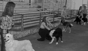Taking part in the 4-H Dog Showmanship events held Monday were, from left, Savannah Mendenhall, Hailey Scott, Brooke Archuleta, Kayla Scott and Grace Roberts. The class was judged by Lisa Martin.
