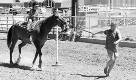 4-H PeeWee Horsemanship…
