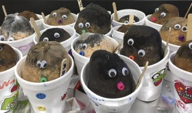 Meeker students learn to make their own chia pets