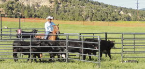 Nothing is more impressive to watch than the combination of handler, dog and horse during the two horseback classes out of five at the 2016 Meeker Classic National Cattledog Association Finals held in Meeker beginning June 15 and running through Sunday. More than 2,000 people were estimated to have visited Ute Park during the trials to watch 140 of the best cattledogs from Colorado, the United States and Canada.