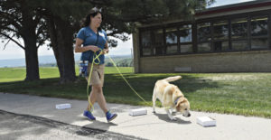 Monica Flores of Valencia, Calif., and her Labrador retriever Rudy work through the container search at the National Association of Canine Scent Work trial held June 10-12 at Meeker High School. Flores and Rudy were one of 105 dog and handler teams who competed.