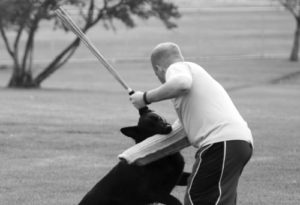 Officer Ty Hamblin of the Rangely Police Department, not pictured, demonstrated recently how his dog, Elmo, above, would protect him against an attacker by standing up to the subject. Below, Elmo latches on to the arm of the attacker, who is actually former Rangely resident Nate Baker, currently a deputy in Moffat County.