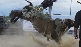 Rock N' Bulls…