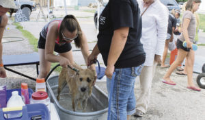 The Rangely 4H Club hosted a combination car wash, pet wash and bake sale July 29  to raise money for clay practice pigeons for practice shooting at the Elks Trap Club in Rangely. The event was sponsored by the 4-H and led by Deb Myers. Pictured is Paityn Myers with one of the dogs.