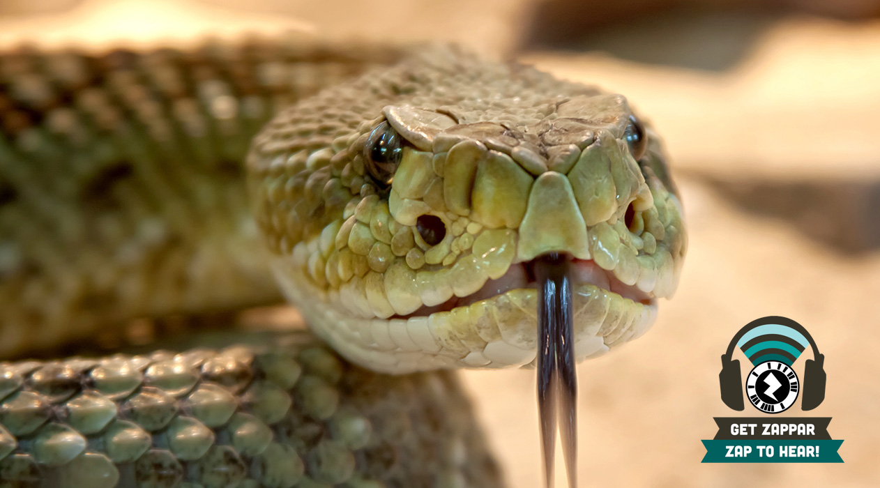 Watch for rattlers | Rio Blanco Herald Times | Serving Meeker ...