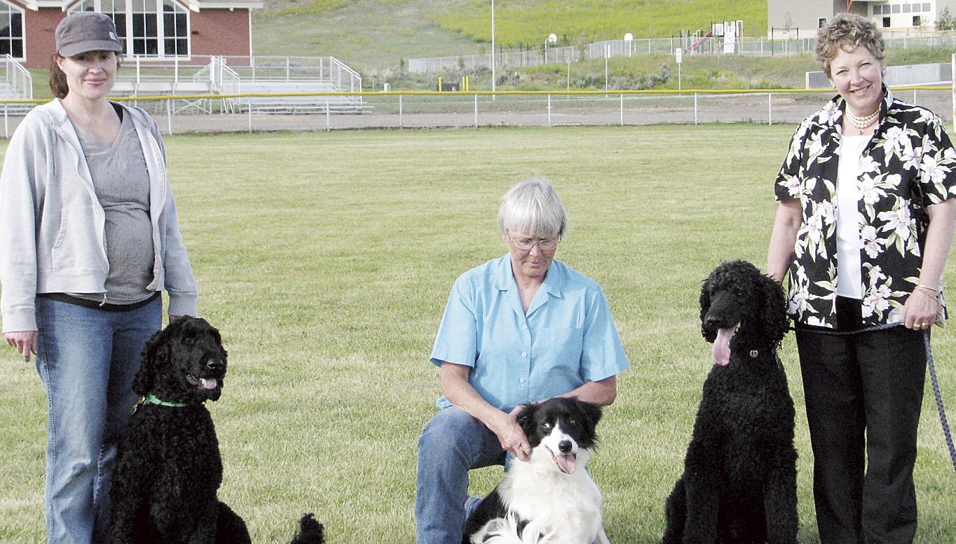 phmk three dogs