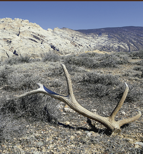 No Shed Collecting In Dinosaur Nat L Monument Rio Blanco