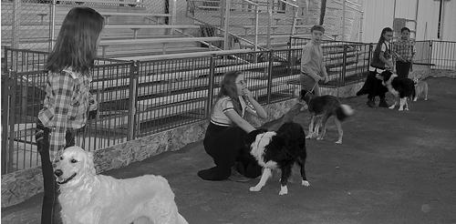 phFAIR-4-HShowmanship-Dogs