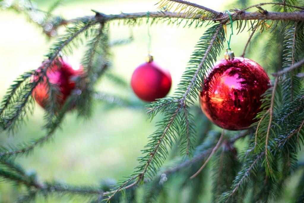 BLM Christmas tree permits on sale | Rio Blanco Herald ...
