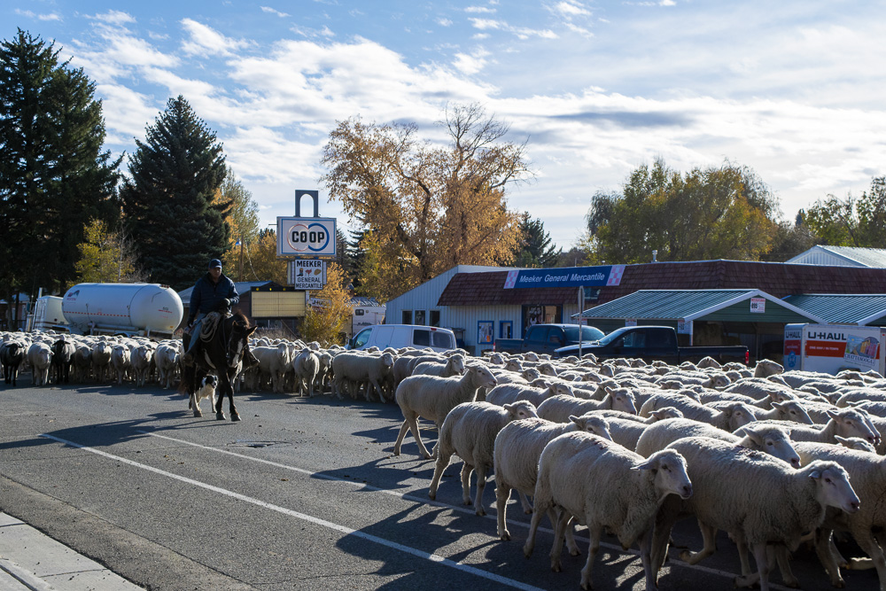 sheep2small