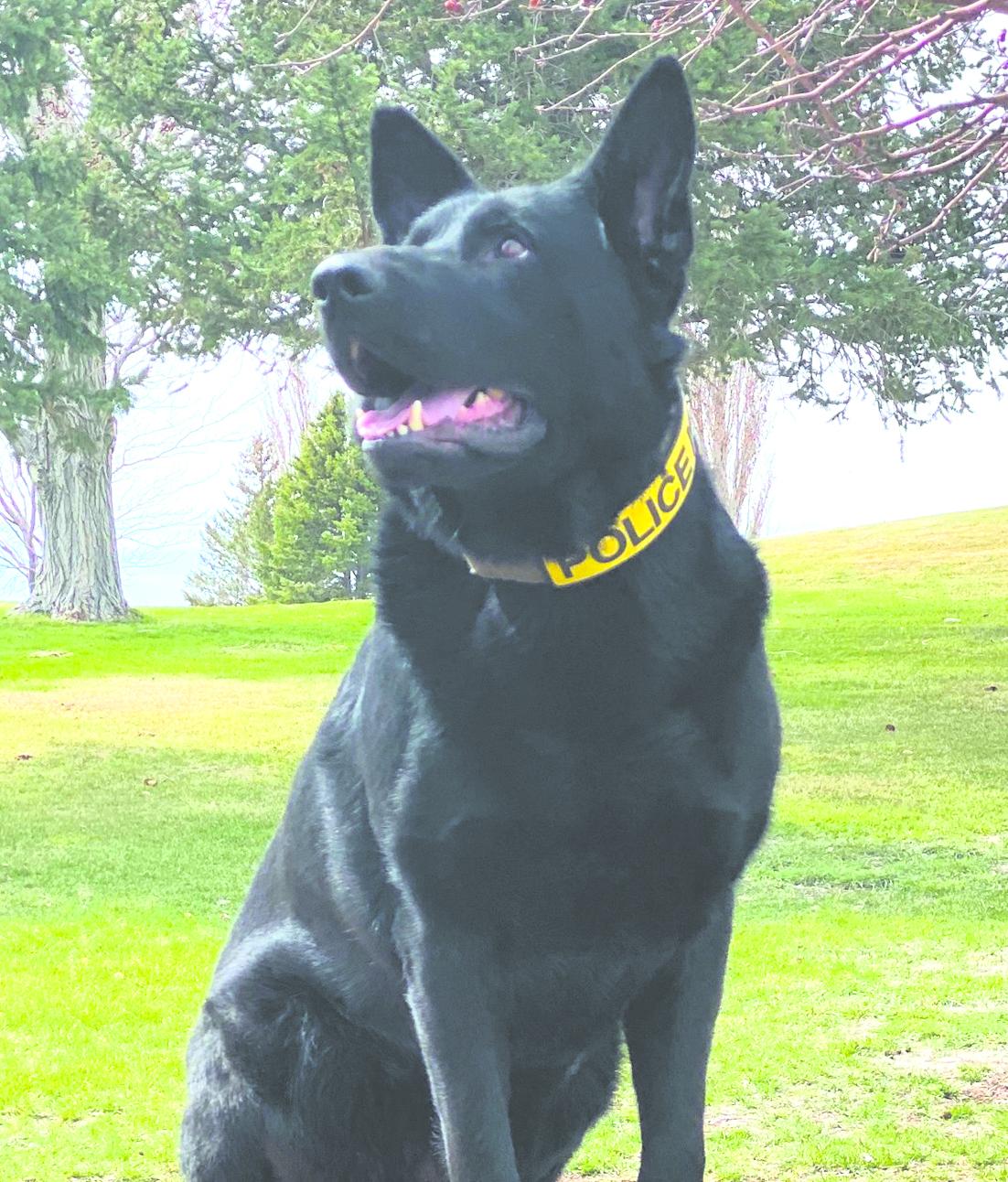 Elko the Police Dog